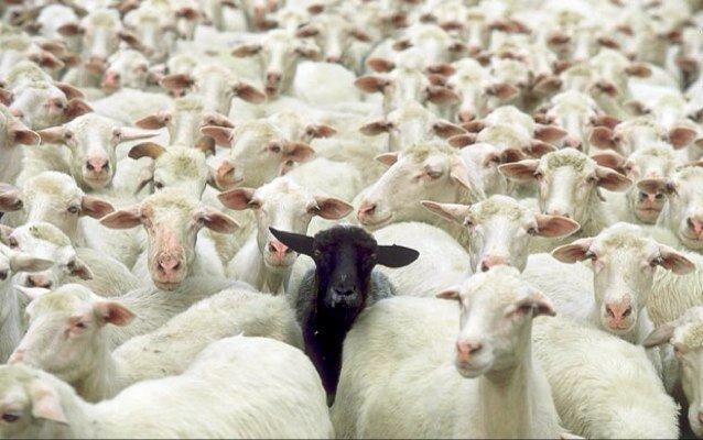 Are You The Black Sheep? | Job Search Radio