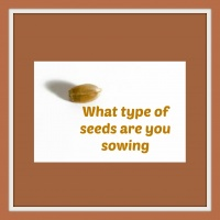 What Seeds Are You Sowing? (VIDEO)